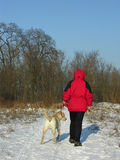 Winter walk with dog. Red parka dressed person with labrador. Walking snowy path Royalty Free Stock Images