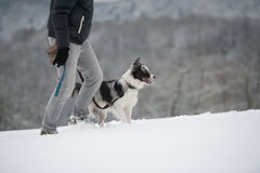 Winter walk with dog. Winter walk with border collie dog Stock Photos