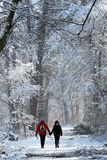 Winter walk in Fontainebleau forest path Royalty Free Stock Images