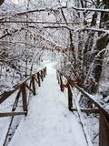Winter walk. Forrest walk in the snow Royalty Free Stock Photo