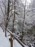 Winter walk. Forrest walk in the snow Stock Photo