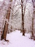 Winter walk. Forrest walk in the snow Stock Image