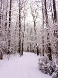 Winter walk. Forrest walk in the snow Royalty Free Stock Photos