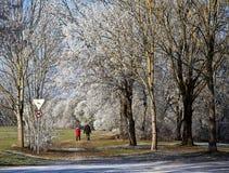 Winter walk with frozen trees Stock Photos