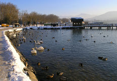 Winter walk by the lake. Taking a walk near WortherSee lake in the winter Stock Photo
