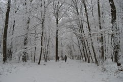 Winter walk. A relaxing day in the woods Stock Image