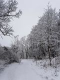 Winter. Walk road Stock Images