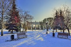 Winter walk through the snow-covered city park. Between green fir trees and bright rowan trees with clusters of red berries - a beautiful winter city landscape Royalty Free Stock Image