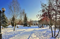 Winter walk through the snow-covered city park. Between green fir trees and bright rowan trees with clusters of red berries - a beautiful winter city landscape Stock Image