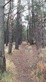 Winter walk in the woods Stock Image