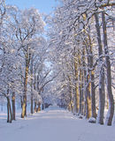 Winter Walkway. Snow covered path bordered by rows of frosted trees on a bright winter day. Sunlight is filtering through the trees Stock Photos