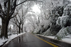 Winter in Washington DC Royalty Free Stock Image