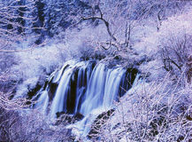 Winter waterfall and tree in jiuzhaigou Royalty Free Stock Image