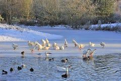 Free Winter Waterside Birds Stock Image - 37898541