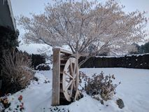 Winter Waterwheel. Beautiful morning, the tree appears to be stretching Royalty Free Stock Images