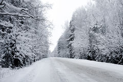 Winter way royalty free stock photos