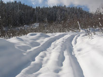 Winter way. Winter road in pine forest. Caucasus, Russia Royalty Free Stock Images