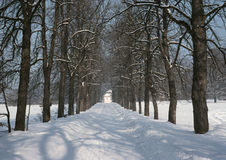 Winter way back. In wooded landscape Stock Images