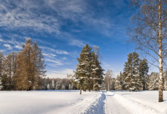 Winter way to the forest Royalty Free Stock Photos