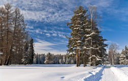 Winter way to the forest Stock Image