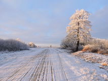 Winter way and trees, Lithuania Stock Photography
