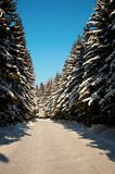 Winter way trough forest Stock Photos