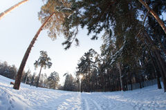 Winter  weather in forest. Sunny winter n weather in village Royalty Free Stock Photo