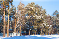 Winter  weather in forest. Sunny winter n weather in village Stock Photo