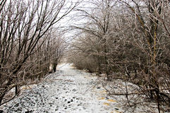 Winter weather, ice storm. Along walking trail royalty free stock photos