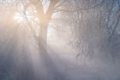 Winter weather phenomenon. Heavily full of wet air condenses on the surface of ice crystals. Morning sun rays shining through the. Animal, wild, america royalty free stock images