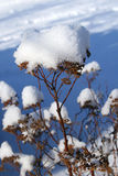 Winter Weed Stockbild