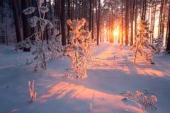 Winter Weihnachten Weihnachtsnatur stockbilder