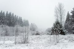Winter Wetlands. A misty, snowy day in wetlands surrounded by evergreens Royalty Free Stock Photos