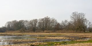 Winter wetlands with bare trees. In bourgoyen nature reserve, Ghent, Flanders, Belgium royalty free stock photography