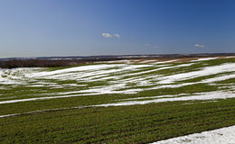 Winter wheat crops in early spring Stock Photo