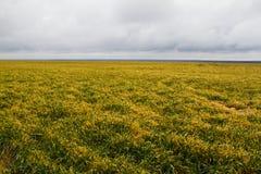 Winter wheat Stock Photos