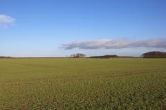Winter wheat fields Royalty Free Stock Photo