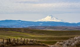 Winter Wheat and Mt Hood. Mt. Hood Viewed From the Fence Line as the Winter Wheat Starts to Grow stock photos
