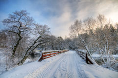 Winter white forest Stock Photography