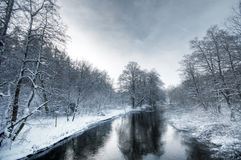 Winter white forest Royalty Free Stock Photo