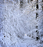 Winter white forrest Stock Photography