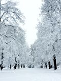 Winter White Out in Park. Park trees covered in snow shortly after a true white out blizzard in Colorado royalty free stock image