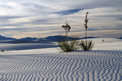 Winter at White Sands National Park. The view from the top of a sand dune at White Sands National Park Stock Images