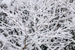 Winter white snow forest background Stock Photo