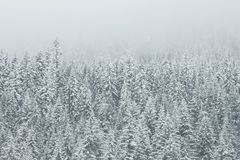 Winter White Snow Trees royalty free stock photo