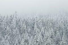 Winter White Snow Trees Royalty Free Stock Photo