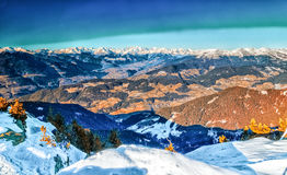 Winter white snowy mountains and green conifers Stock Images