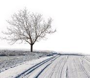 Winter white snowy scenery Stock Image