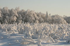 Winter white vacation. Snow covers the forest, frozen field and forest Royalty Free Stock Photo