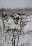 winter wiejski krajobraz Obrazy Stock
